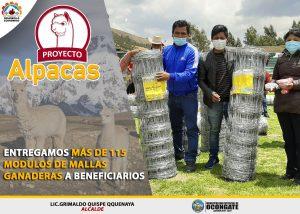 ALCALDE DE OCONGATE ENTREGÓ MALLAS GANADERAS A BENEFICIARIOS DEL PROYECTO ALPACAS.